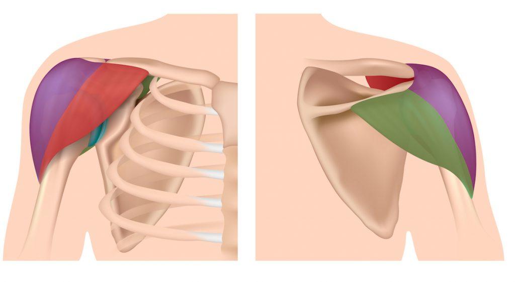 三角筋の部位